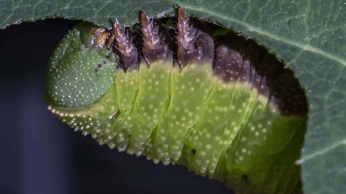 The Very Hungry Caterpillar case for Veganism (or at least abolishment of industrial farming)